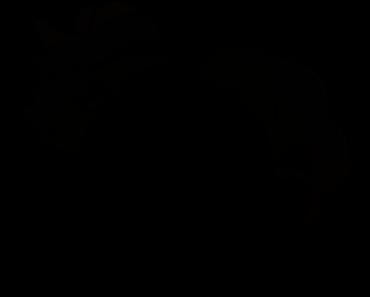 Pokemon Silhouette 037 Vulpix