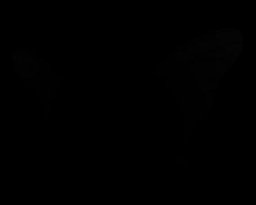 Pokemon Silhouette 049 Venomoth