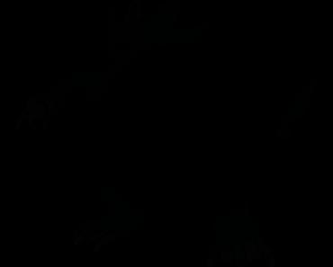 Pokemon Silhouette 055 Golduck