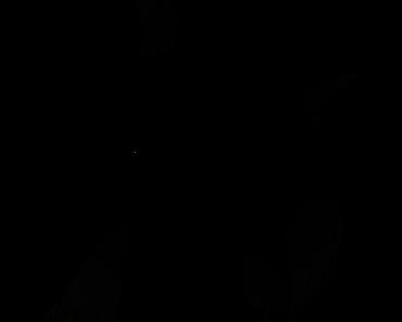 Pokemon Silhouette 123 Scyther