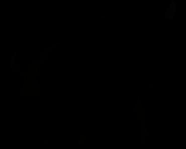 Pokemon Silhouette 128 Tauros