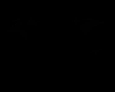 Pokemon Silhouette 142 Aerodactyl
